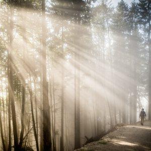 Herrliche Wälder | Natur- und Geopark Steirische Eisenwurzen