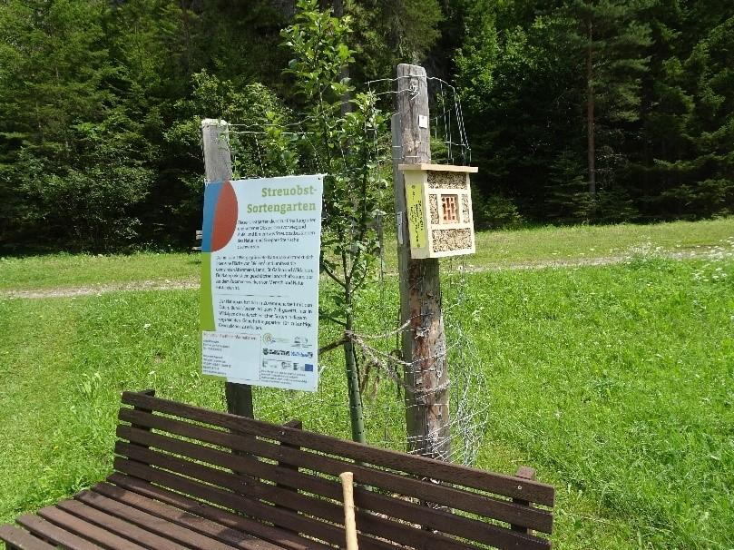 Biodiversitt Hotspot Streuobstwiese