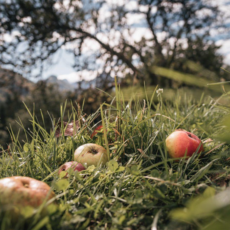 Lei | Natur- und Geopark Steirische Eisenwurzen