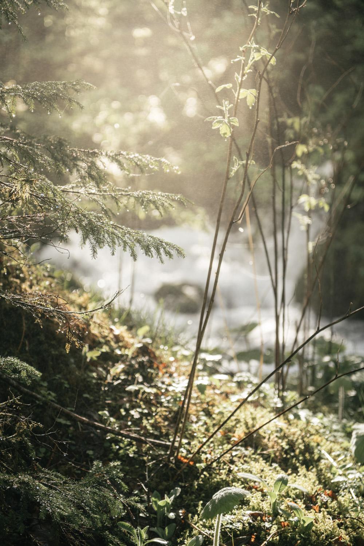 Naturpark Klaferquellestefanleitner | Natur- und Geopark Steirische Eisenwurzen