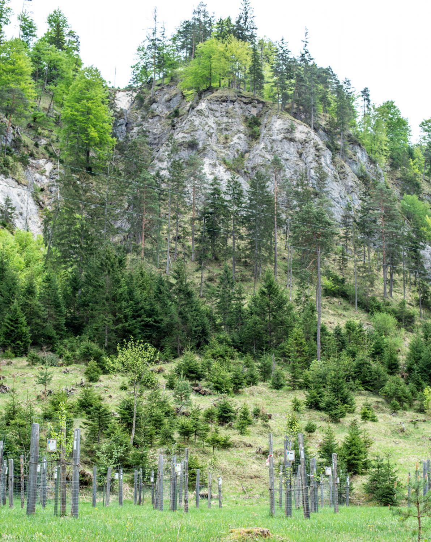 Streuobstgengarten Wildalpen C Scheucher | Natur- und Geopark Steirische Eisenwurzen