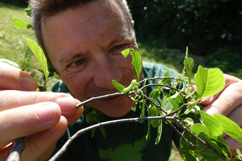 C.S.I. PhänoBiota: Forschen mit pflanzlichen Neuankömmlingen aus aller Welt