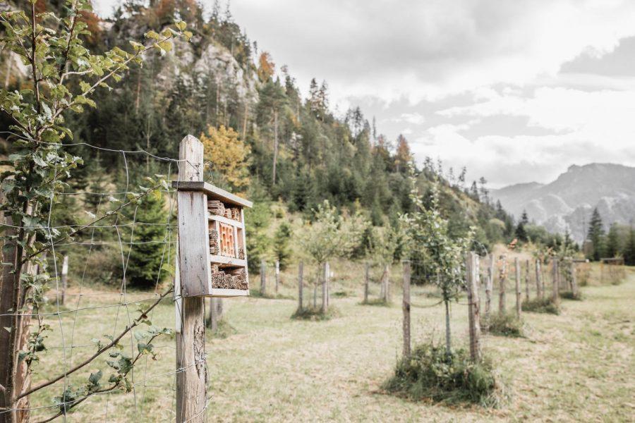 Copyright: Thomas Sattler - mit Unterstützung von Bund, Land Steiermark und der Europäischen Union (LEADER) data-fancybox-group=
